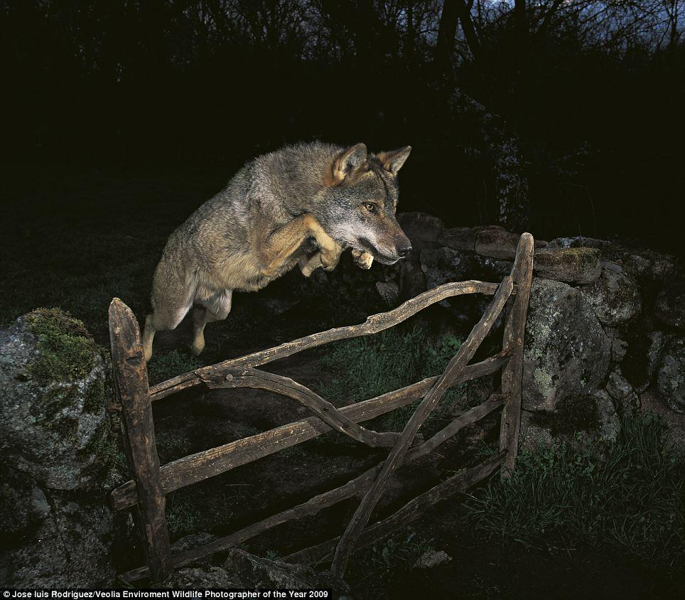 wildlife photography 1 Wildlife Photographer of the Year 2009