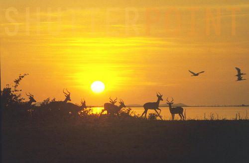 4 kariba sunset Lake Kariba Sunset