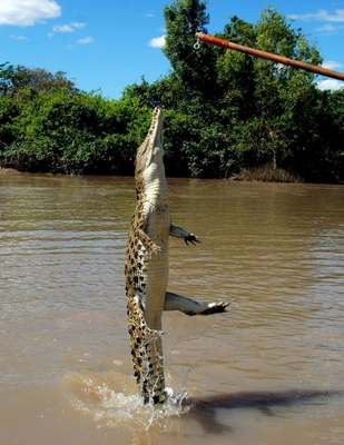 Crocodiles Feeding 11 Scary and dangerous Crocodiles Feeding