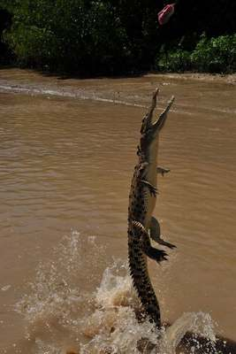 Crocodiles Feeding 21 Scary and dangerous Crocodiles Feeding