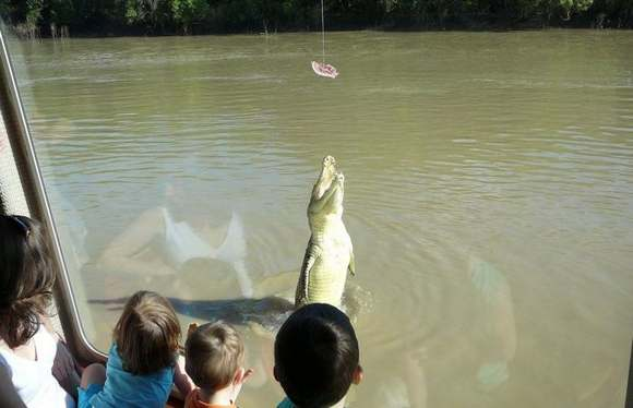Crocodiles Feeding 27 Scary and dangerous Crocodiles Feeding