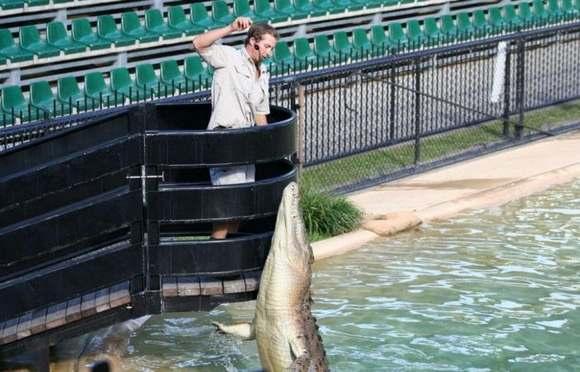 Crocodiles Feeding 4 Scary and dangerous Crocodiles Feeding