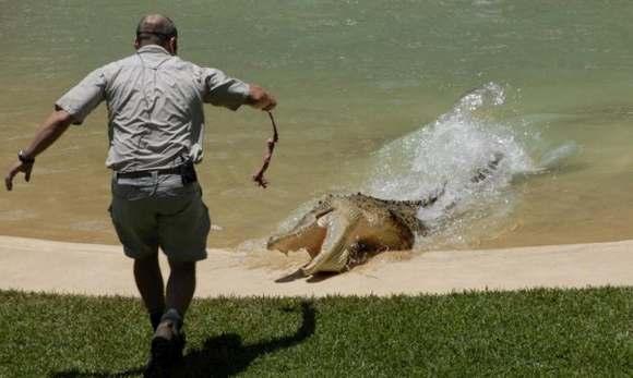 Crocodiles Feeding 5 Scary and dangerous Crocodiles Feeding