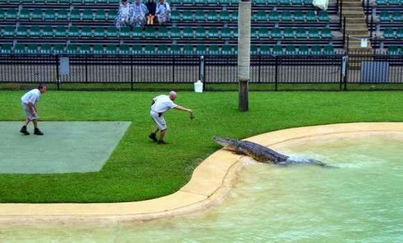 Crocodiles Feeding 6 Scary and dangerous Crocodiles Feeding