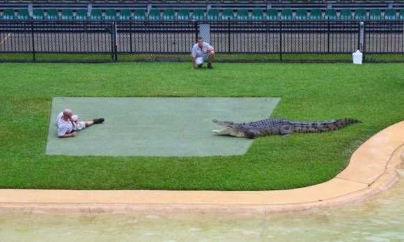 Crocodiles Feeding 7 Scary and dangerous Crocodiles Feeding