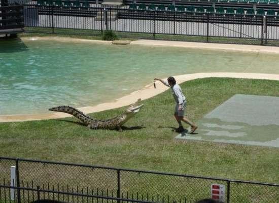 Crocodiles Feeding 8 Scary and dangerous Crocodiles Feeding