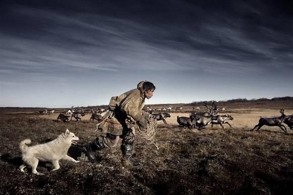 raindeers siberia 4 Sibir Reindeer Herdsmen