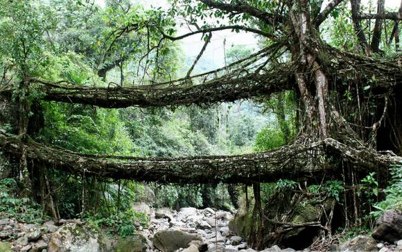 Living Root Bridges India 1 Living Root Bridges in India