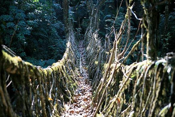 Living Root Bridges India 5 Living Root Bridges in India