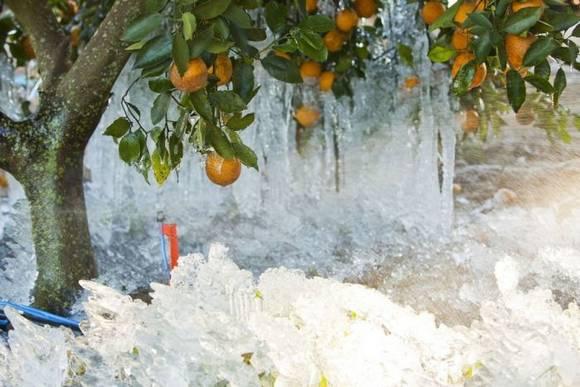 snow florida 9 Winter in Florida